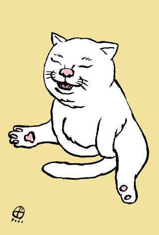 白鵬のような猫