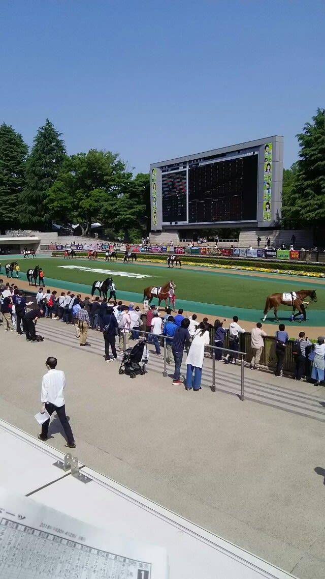 東京 競馬 予想