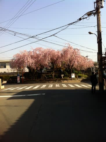 Sakuratetudou