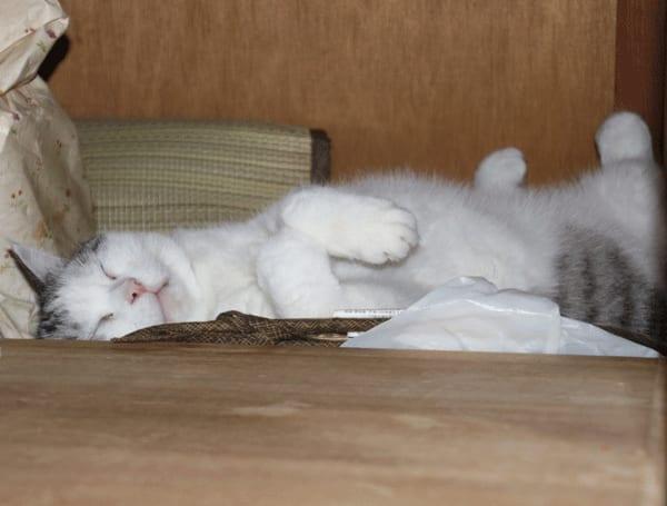 猫が寝る場所