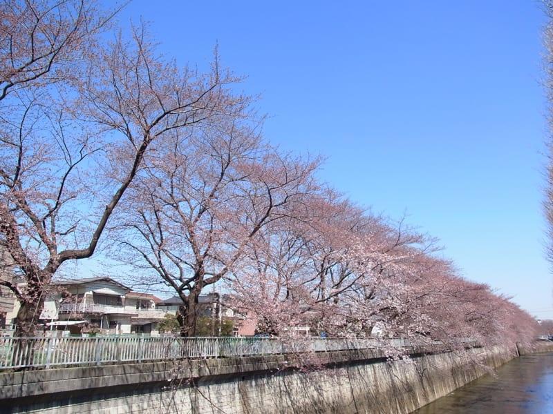 03月27日 石神井川
