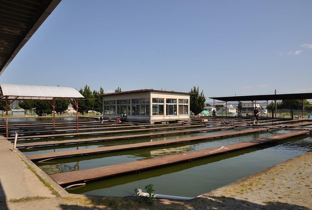 郡山金魚卸売センター