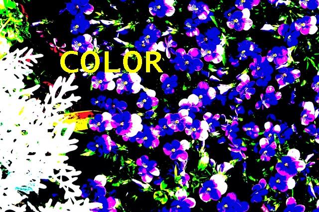 日程 色彩 検定