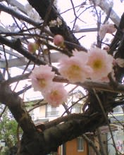 2010_0227_498