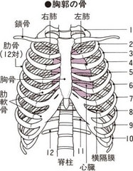 痛み あばら骨 咳をすると肋骨のあたりが痛い!どう対処法すればいい? |
