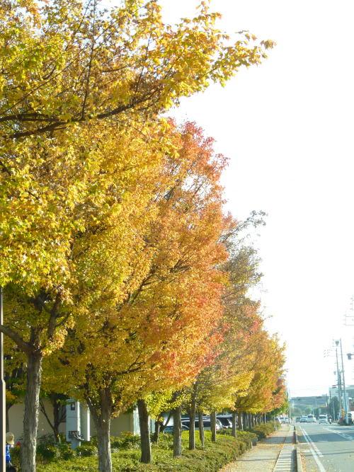 芳川公園の紅葉