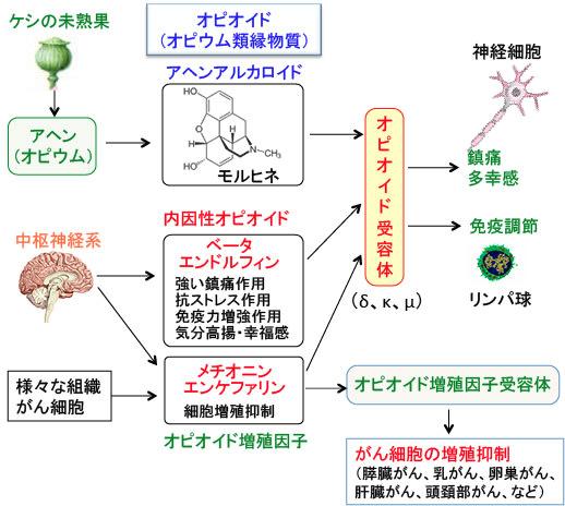 2011/11/01号 クローズアップ「癌悪液質の謎に挑む …