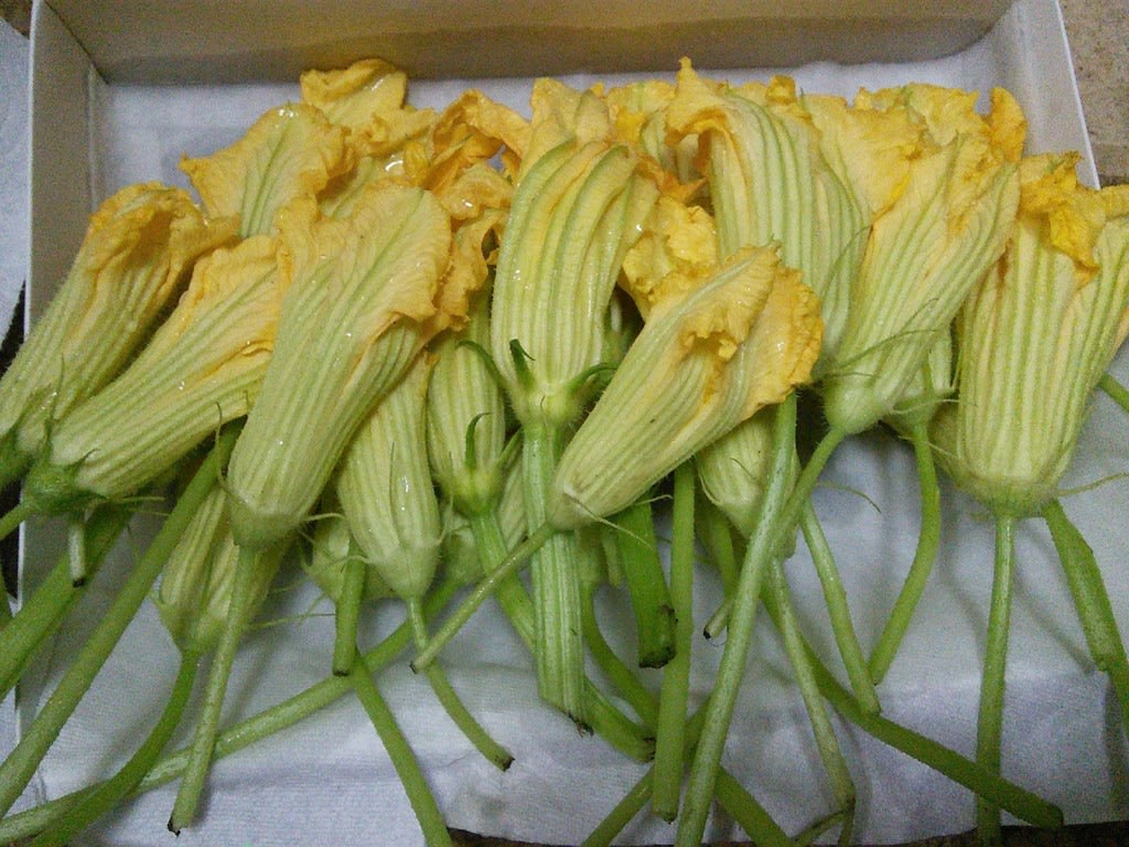 Vegetarian-Stuffed-Zucchini-Flowers