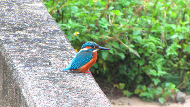 091026kingfisher1