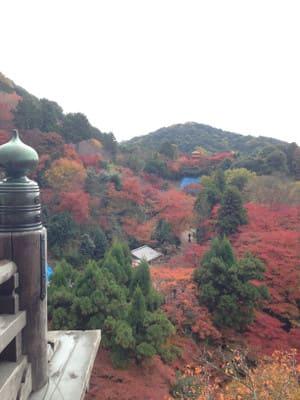 清水寺から眺める紅葉