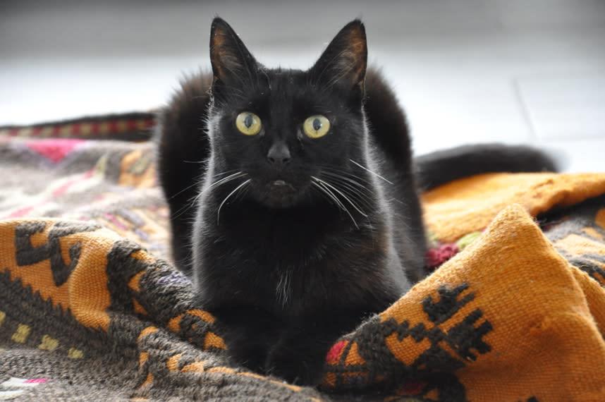 黒猫 かわいい!