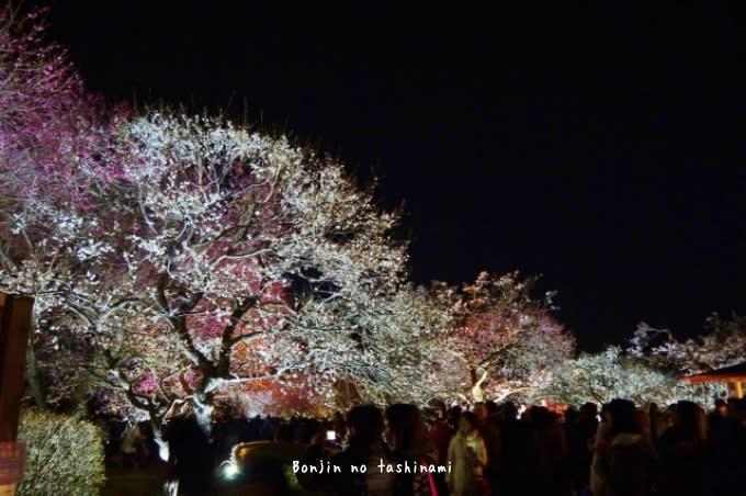 夜梅祭 偕楽園 (水戸市) - 凡...