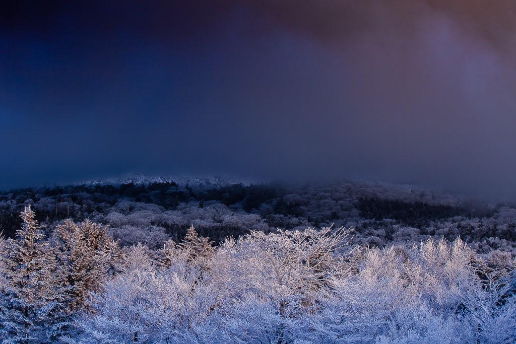 水ヶ塚の霧氷林の写真