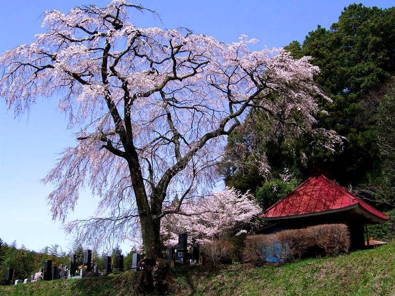 「益子町」のブログ記事一覧(3ページ目)-栃木の木々