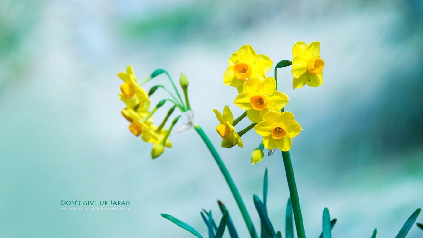 黄色に黄色と白と白 壁紙ing管理人の写真ブログ