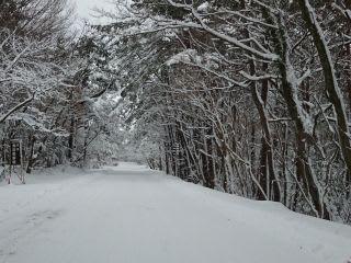 圧雪約5cm。昨日はガタガタだったけど、今日は平らになりました。