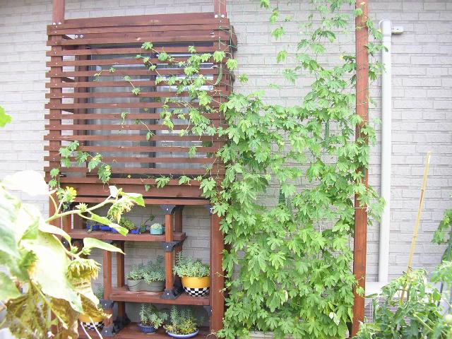 我が家の緑のカーテンの画像