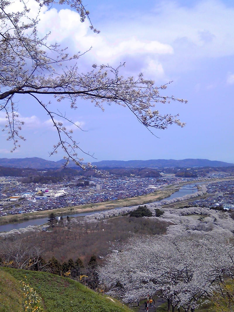 東北宮城船岡は桜満開