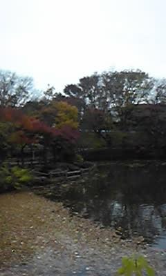 晩秋の菊名池