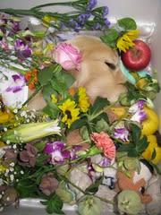 お気に入りのオモチャと、たくさんの花に囲まれて旅立っていきました…
