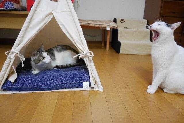 おヒトリ様用テント