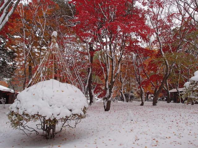 11月9日園内風景(1)