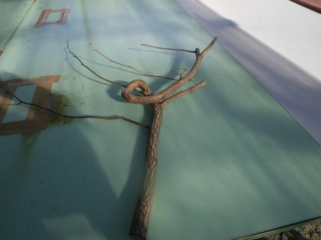 変わった枝