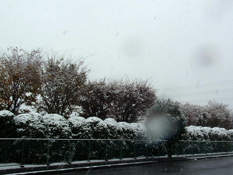11月24日 降雪