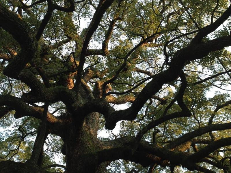 木と空気…。