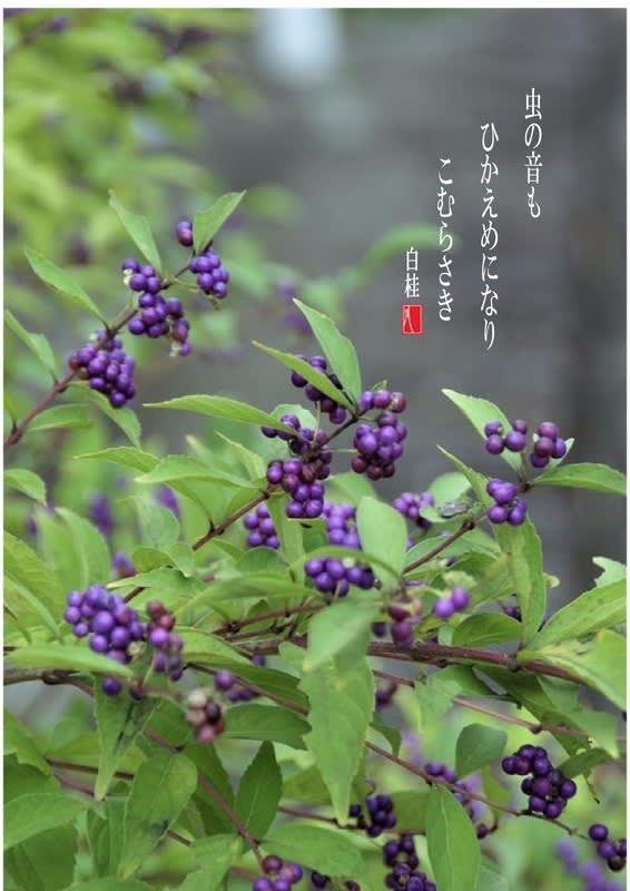 紫式部 俳句
