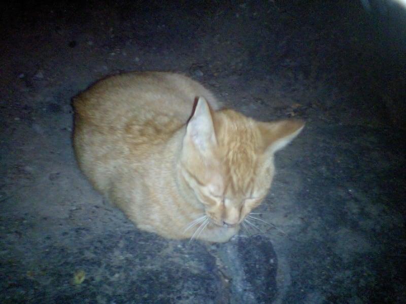 Neko_20081028_01_2