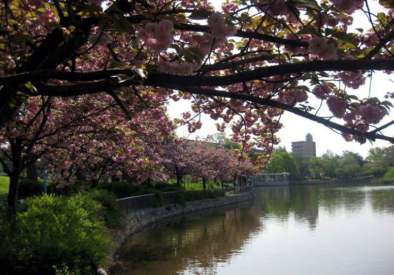 Double_flowering_park