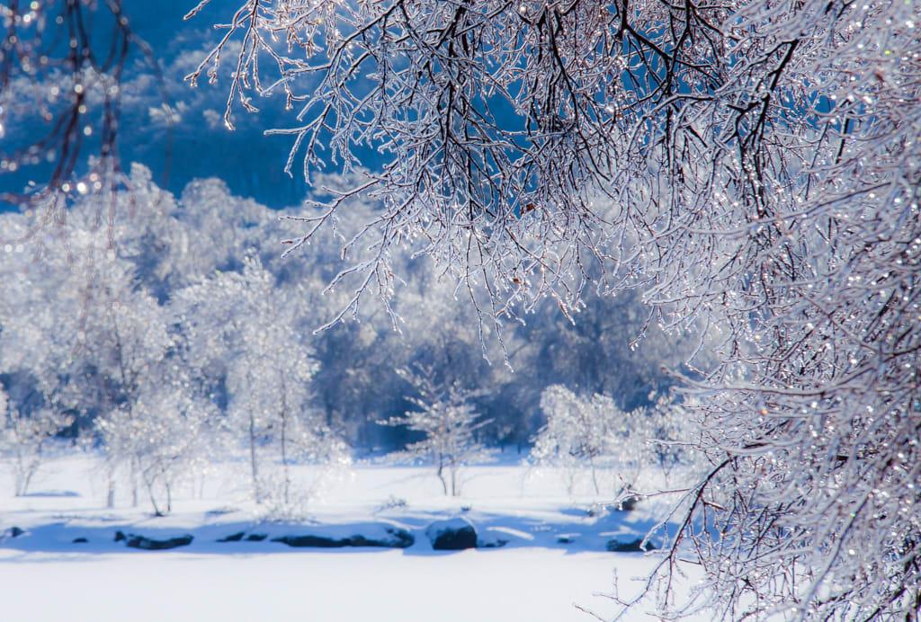 白樺湖の雨氷