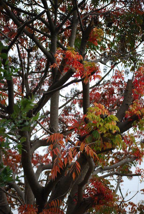 色づいた枝葉