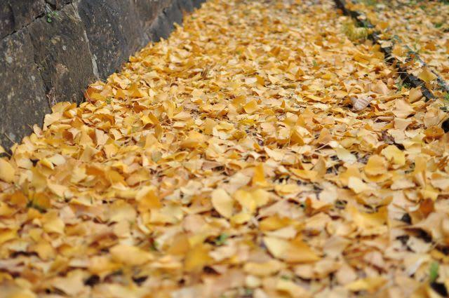 落葉の小路