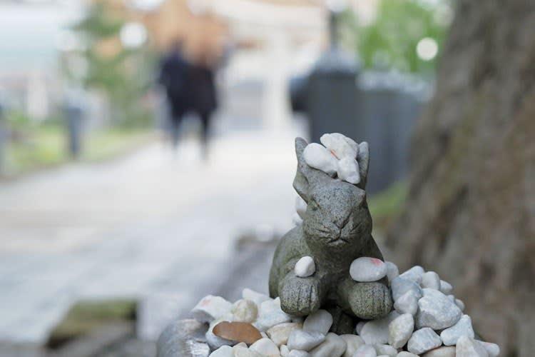 白兎神社のウサギ