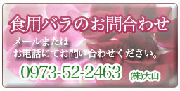 Rose_tel