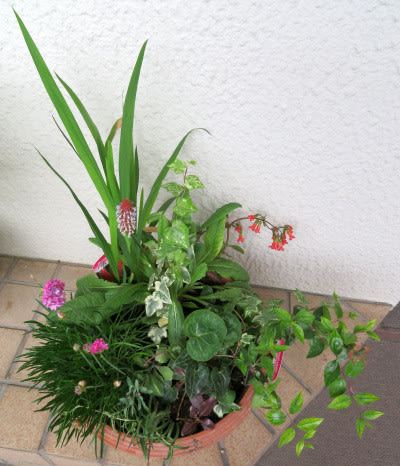2021/05/16 寄せ植え鉢-F