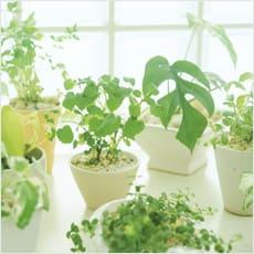 「冬だけどベランダでハーブ&野菜を育てたい」の質問画像
