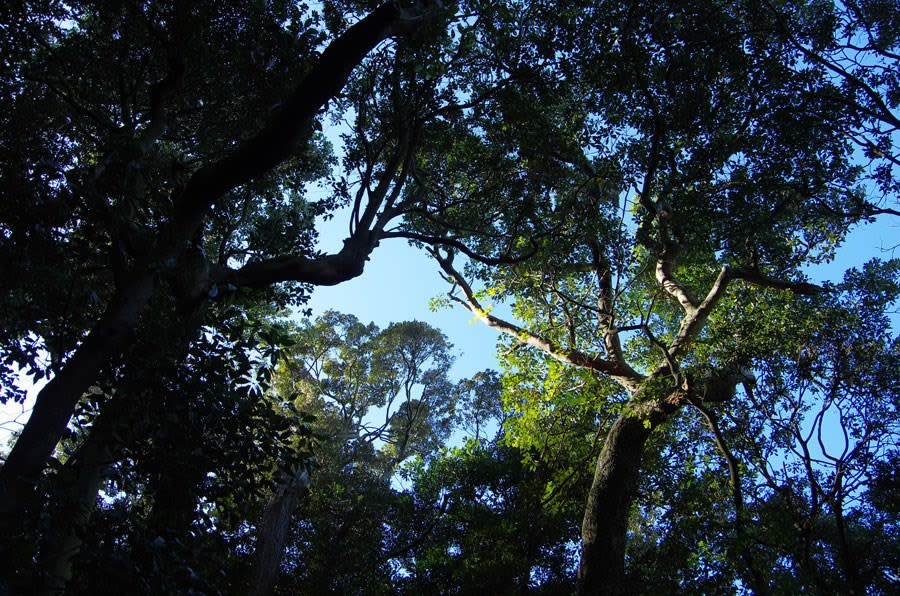 鹿島の森暖帯常緑樹林