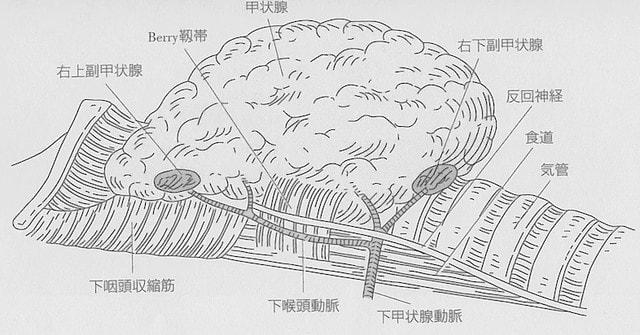 神経 反 麻痺 回 反回神経麻痺患者への対応【いまさら聞けない看護技術】