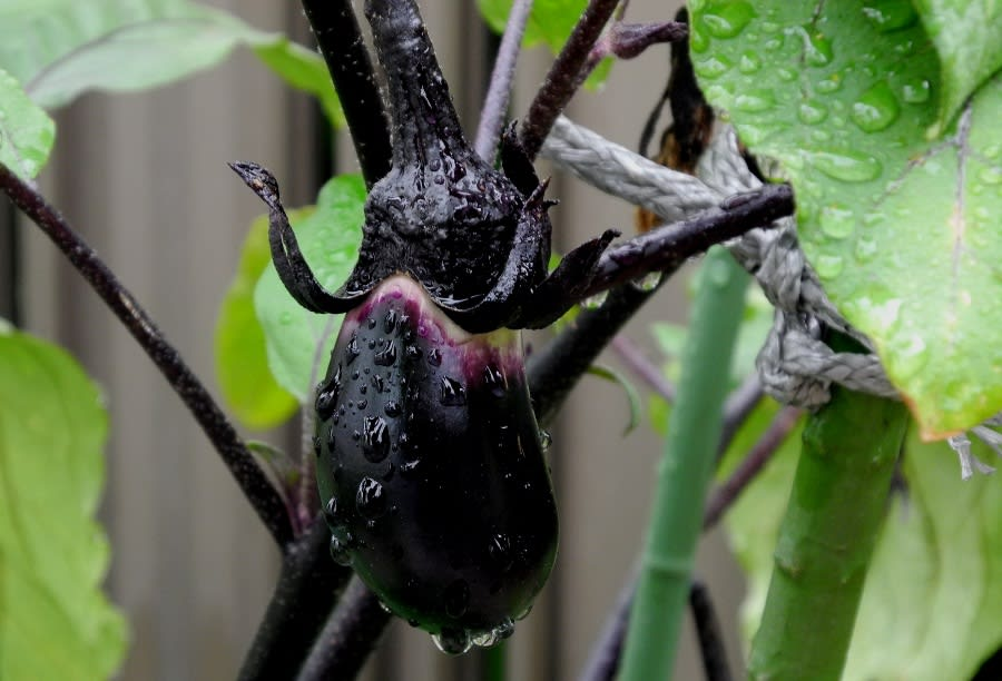 瓜の蔓に茄子(なすび)はならぬ...