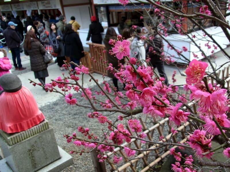 01月31日 日枝神社の梅