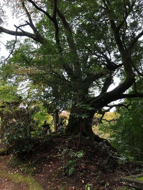 嘉藤太ご夫妻の墓