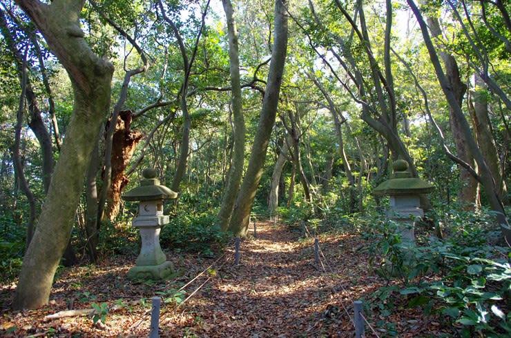 鹿島の森/落ち葉の参道