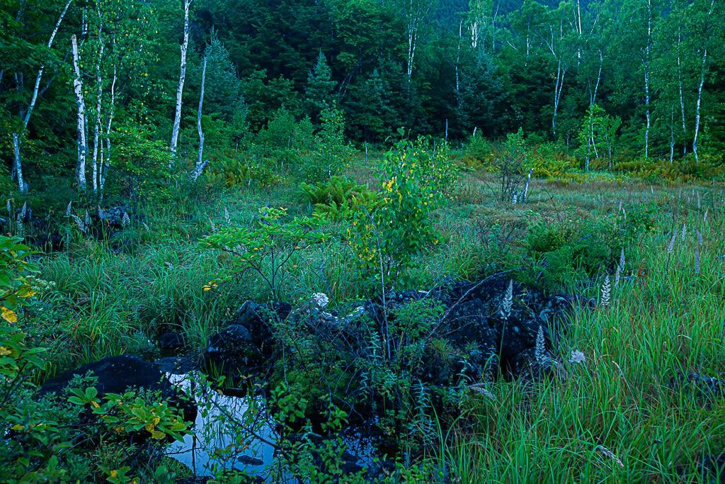ルリボシヤンマの生息地の写真