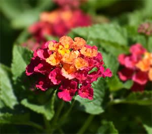 8月の花たち おしゃべり花ガーデンと手作り三昧