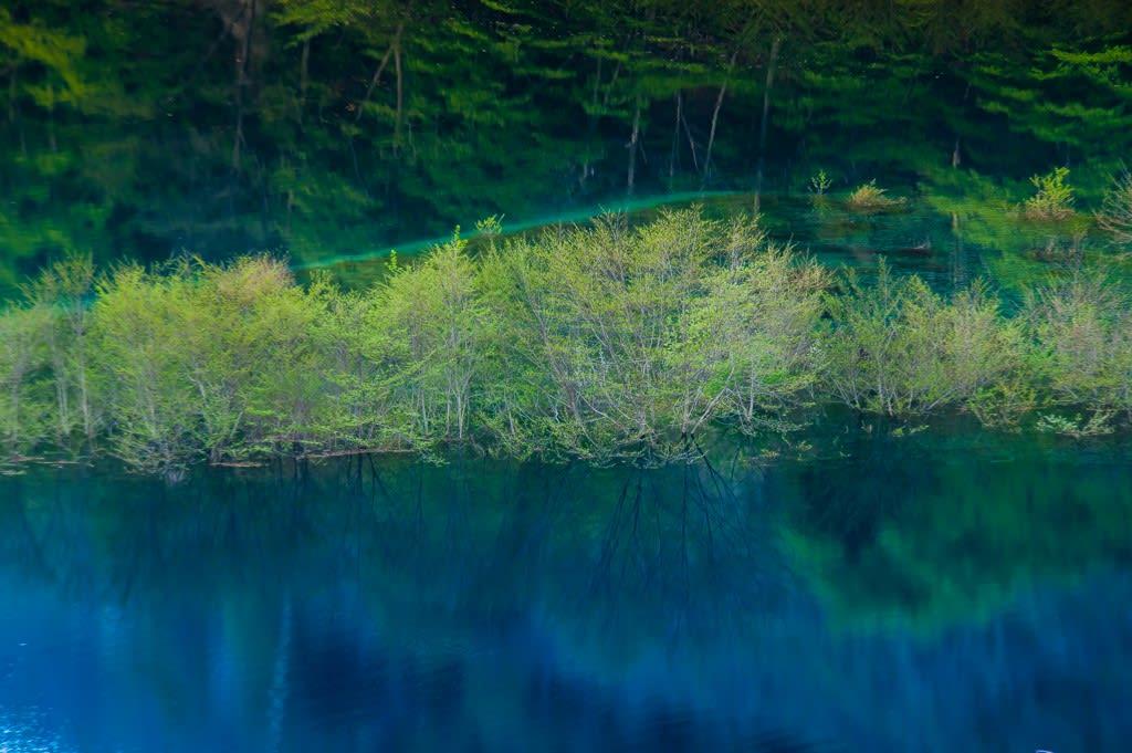 奥四万湖の浮島の写真