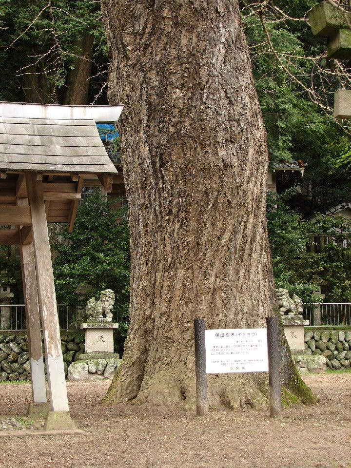2006年6月のブログ記事一覧-巨樹、巨木巡礼
