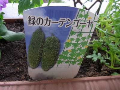 名札:緑のゴーヤ